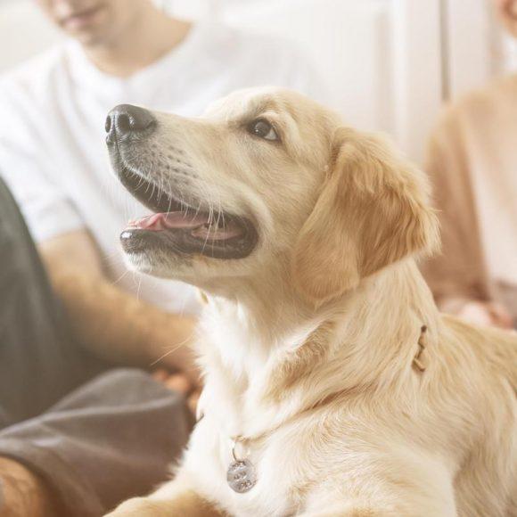 Czy alergik może mieć zwierzę w domu?