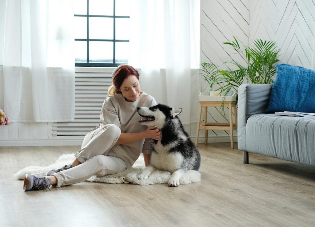 pies w domu alergika